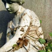 Root Corset, Karen Saler